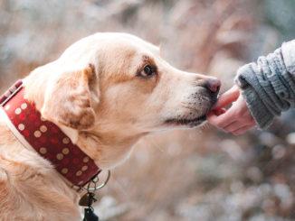Insändarskribenten vill få klappa alla hundar i Södertälje.